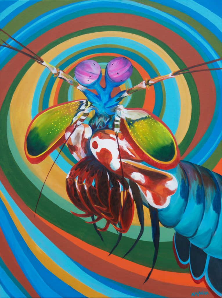 Mantis Shrimp [ Acryl on Canvas ]